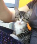 Отдам котёнка, Аромашево