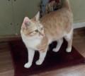 Кастрированый, домашний котейка в добрые руки, Каякент