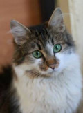 Котенок с изумрудными глазами ищет дом, Белгород