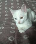 Кошечка разноглазая в добрые руки, Омск