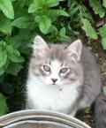 Милые котята ждут своих хозяев, Судиславль