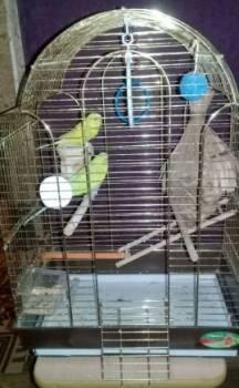 Попугаи, Кедровый, цена: 1 800р.