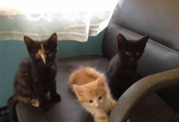 Котята, Астрахань, цена: не указана