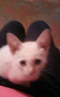 Котёнок, Самара