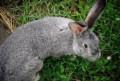 Кролики, Тамбов