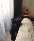 Котёнок, Усть-Кинельский