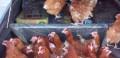 Продаём курочек, Феодосия