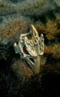 "Кольцо ""Птица"" (серебро 925), Коряжма"