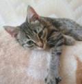 Котенок в добрые руки, Белгород