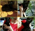 Кошечка ищет семью, Находка