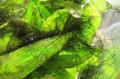 Сайдекс-лучшее средство для оздоровления аквариума, Пенза