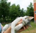 Кошечка в добрые руки, Оболенск
