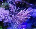 Кораллы в морской аквариум, Сасово