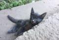 Котята, Рязань