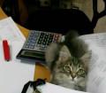 Котик очень добрый, Омск