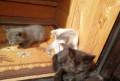 Отдам котят в добрые руки, Чебоксары