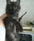 Котенок, Петрозаводск