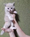 Кот и кошка, Большой Лог