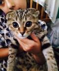 Кошка, Махачкала
