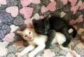 Умных приученных котят в добрые руки, Захарово