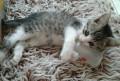 Котенок ищет хороших хозяев, Егорлыкская
