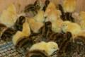 Перепела, яйца (можно инкубационные), мясо, Саратов