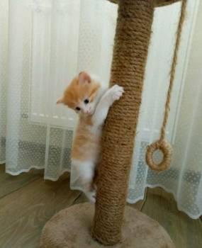 Котята в добрые руки, Гвардейск, цена: 1р.
