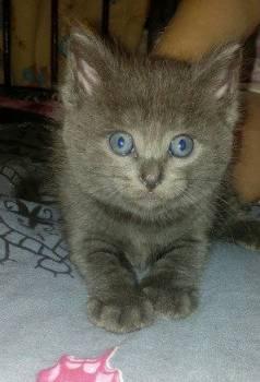 Отдам котят в хорошие руки, Томск, цена: 10р.
