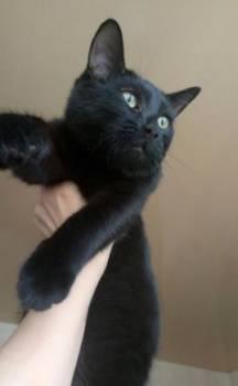 Котёнок, Нижнекамск, цена: не указана