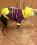 Одежда для собаки, Туношна