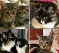 Котятки, Зудилово
