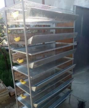 Клетка для перепелов, Красноперекопск, цена: 3 800р.