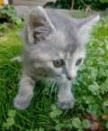 Котенок в добрые руки, Брянск