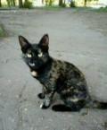 Трехшерстный котенок, Кузнецк