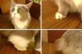 Кошечке нужна помощь, Голышманово