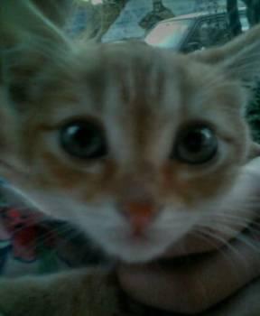 Маленький рыжий кот