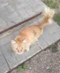 Кот ищет дом, Александров