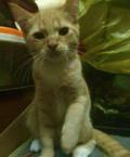 Рыжий котёнок, Подольск
