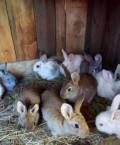 Кролики, Колышлей