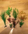 Аквариумное растение, Смоленск