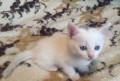 Котёнок, Рязань