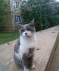 Красавец кот, Перевоз