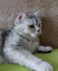 Котята, только в хорошие руки, Серов