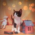 Котенок в дар, Балашиха