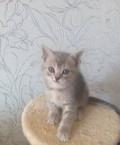 Котятки, Динская