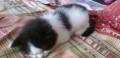 Котёнок, Тутаев