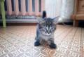 Котята в добрые руки, Владимир
