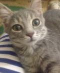 Котенок, Изобильный