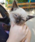 Отдаём красиво котёнка даром в хорошие руки, Михайловск