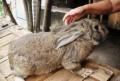 Продаются кролики, Задонск